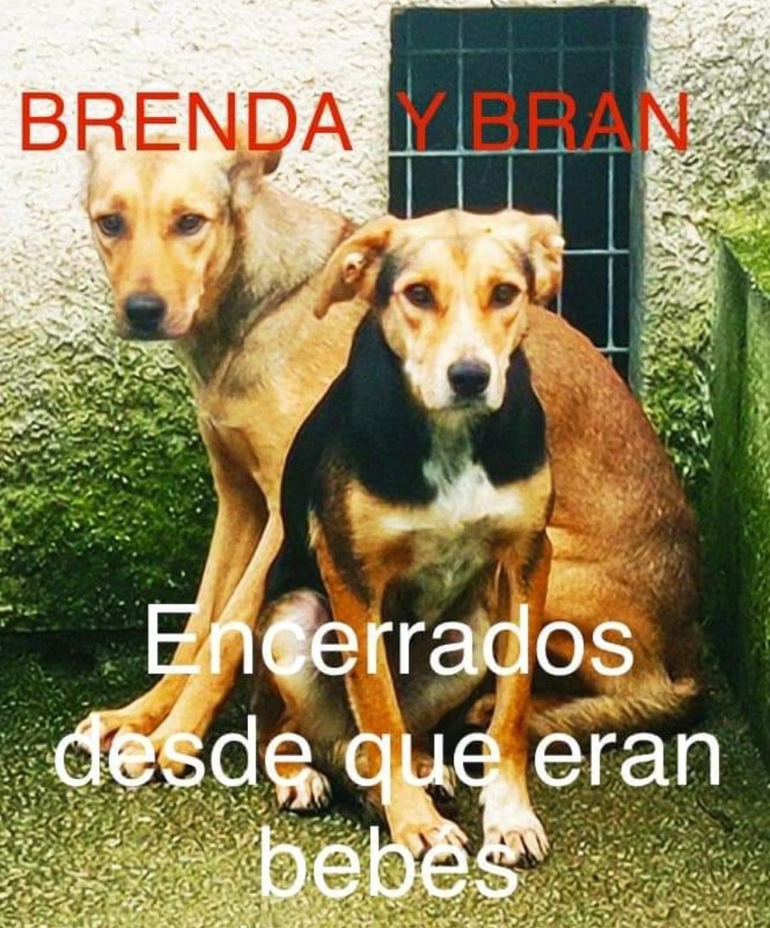 Brenda y Bran